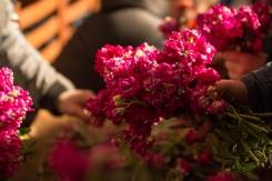 Raccolta nella notte dopo la processione del venerdì santo, la violaciocca, in dialetto balacu, viene organizzata in mazzetti per decorare la statua di San Michele.